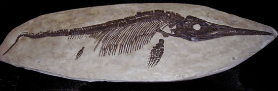 Mary-Anning-fossile