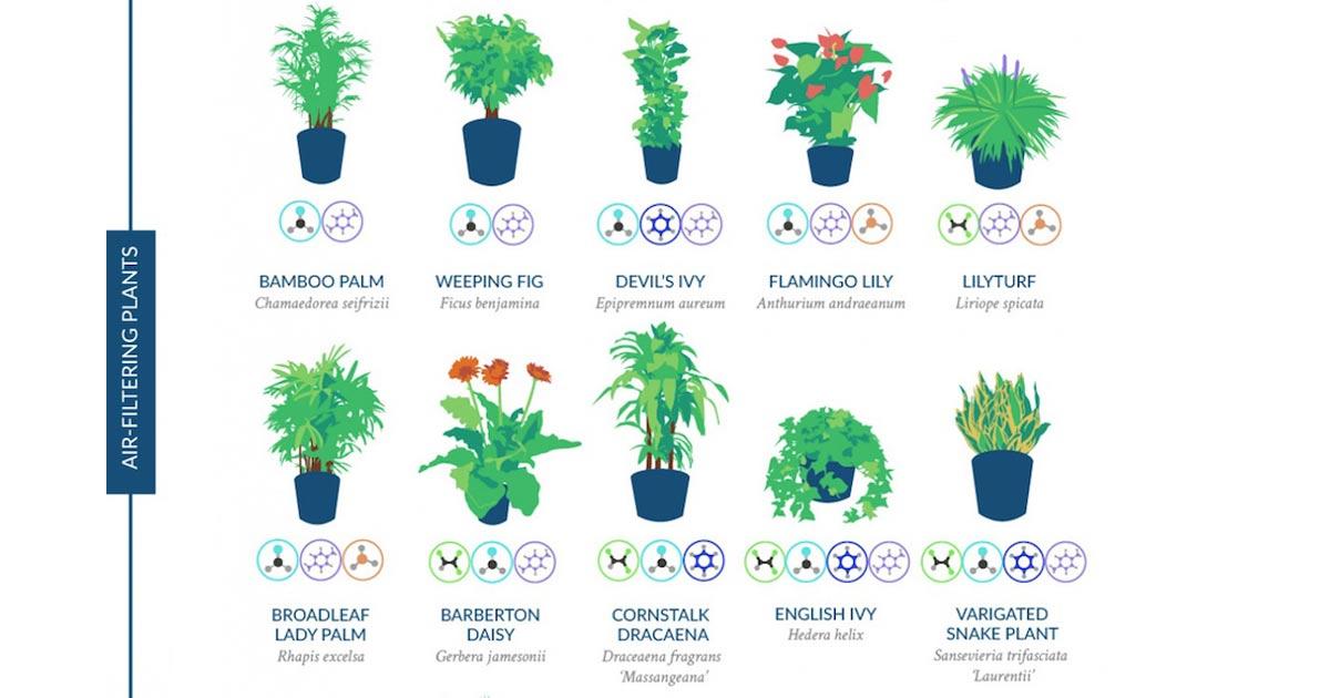 La nasa ha realizzato uno studio delle piante che purificano l aria di casa vanilla magazine - Piante che purificano l aria in casa ...